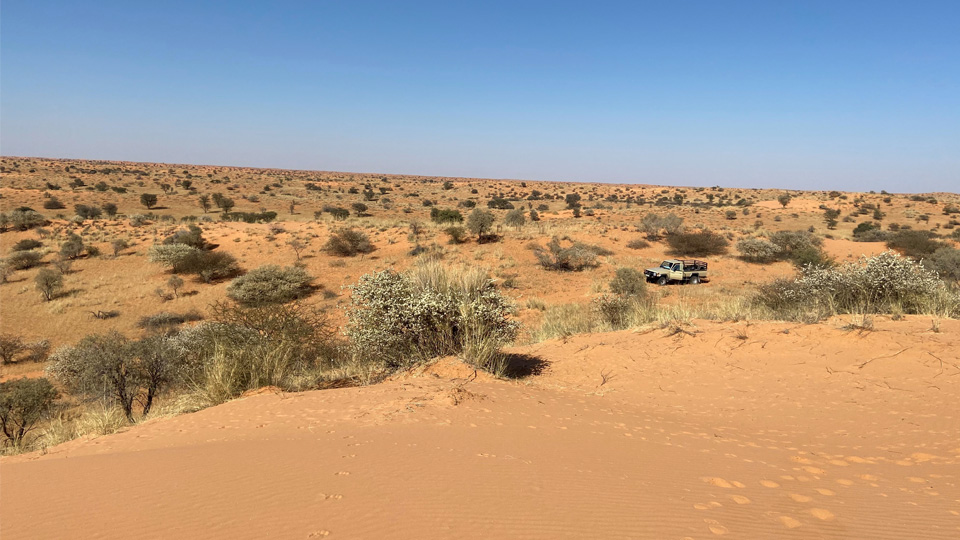 Red Sand and Dry Dunes in the Kalahari